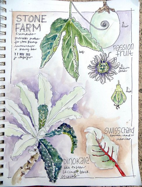 from my sketchbook ~ stone farms by janelafazio, via Flickr
