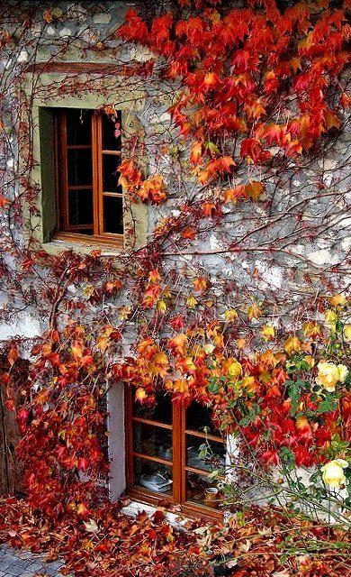 Autumn Ivy.. Savoie, France