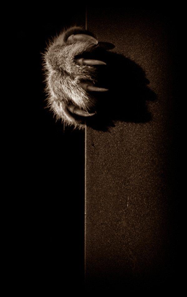 terra the cat