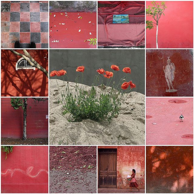 Papaver rood , roze ,wat groen en grijs . All images are from my Flickr friends by Catharinas-Love, via Flickr
