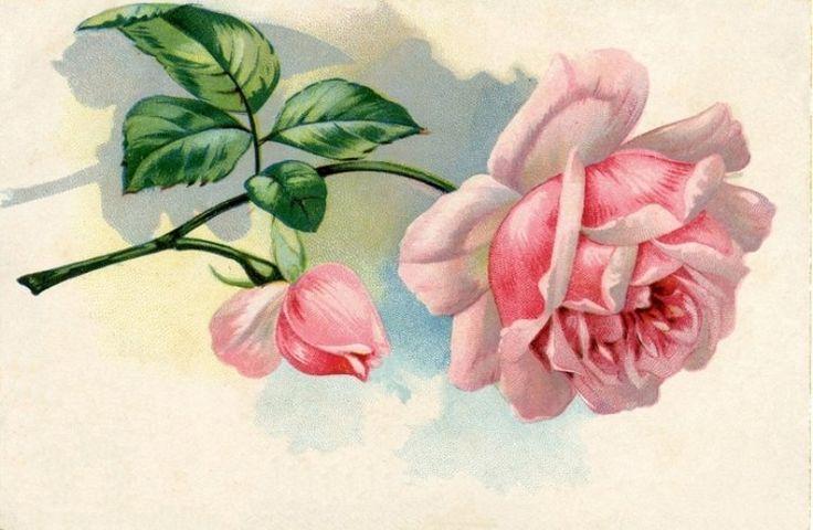 Картинки городов, розы винтаж открытки