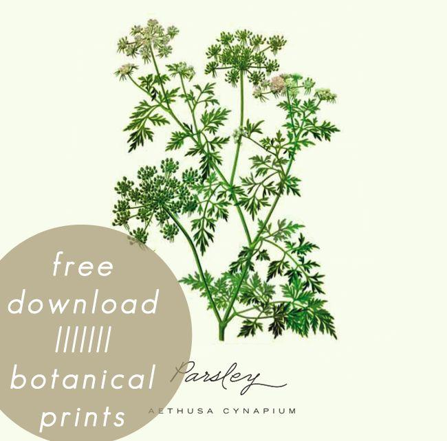 Free download of botanical prints (Set 3) designed by @Jennifer Olmstead
