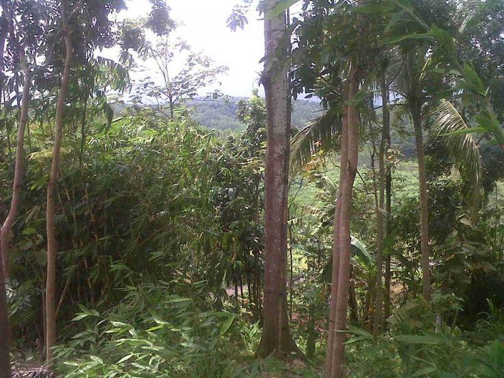 Tanah Kebun/Dusun Berkolam Utk DiJual/DiSewa/Pajak di Kg. Galau Kuala Pilah Negeri Sembilan MalaysiaKlik untuk lihat Peta - 1.5 ekar - 15 minit dari Seri Menanti - Rizab Melayu - Tanah Pertanian - Bersebelahan tanah tinggi dan jauh dari kawasan penduduk ramai (tiada masalah aduan bau busuk jika ternak ayam) - Ada kolam air semulajadi (bersebelahan mata air) - Sesuai untuk ternakan ayam udang keli kelisa arowana itik talapia - Boleh bina rumah burung untuk projek burung wallet/walid - Tanah…