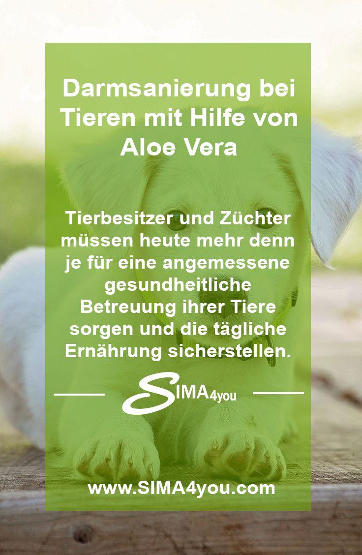 Wie Du mit 100% Bio Premium Aloe Vera auch Deinen Vierbeiner unterstützen kannst   100% Premium Bio Aloe Vera als Drink, Gel oder Frischblatt erhältst Du in meinem SIMA4you Online-Shop: https://sima4you.com  #aloevera #verway #tiere #katze #hund #darmsanierung #tierarzt #health