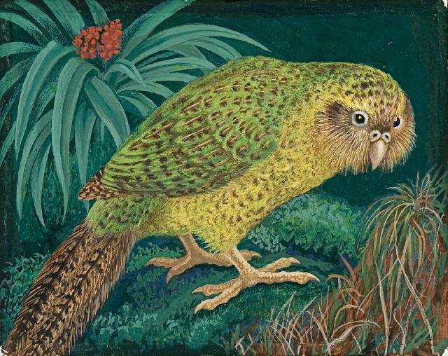 "eileen mayo, kakapo, 1976 (for the series ""rare and endangered birds of new zealand"")"