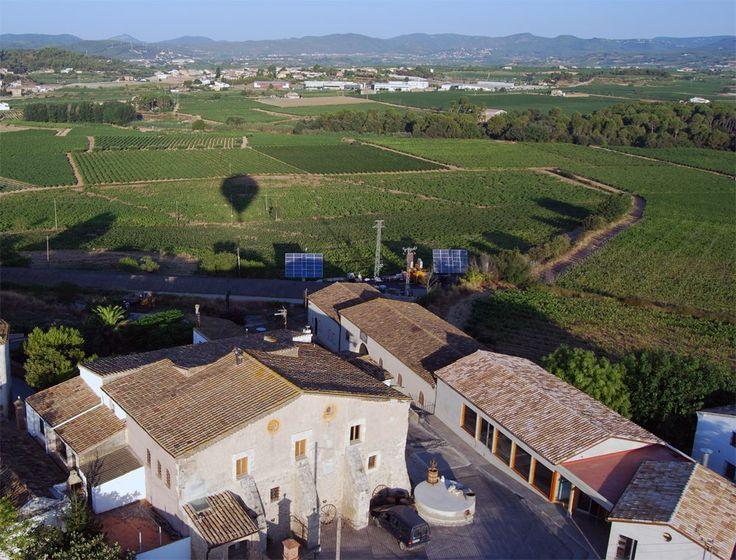 Hoy catamos el vino tinto ecológico Sang de Drac (Sangre de Dragón) 2013 de la bodega Cellers de Can Suriol de Font-Rubí (Barcelona) y perteneciente a la D.O. Penedès.