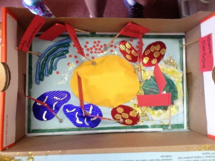 plant cell project, plant cell structure, simple plant cell, plant cell organelles, plant cell project materials, plant cell model labeled, 3d animal cell model, 3d plant cell model in a shoebox, 3d model of plant cell using household items, types of plant cells