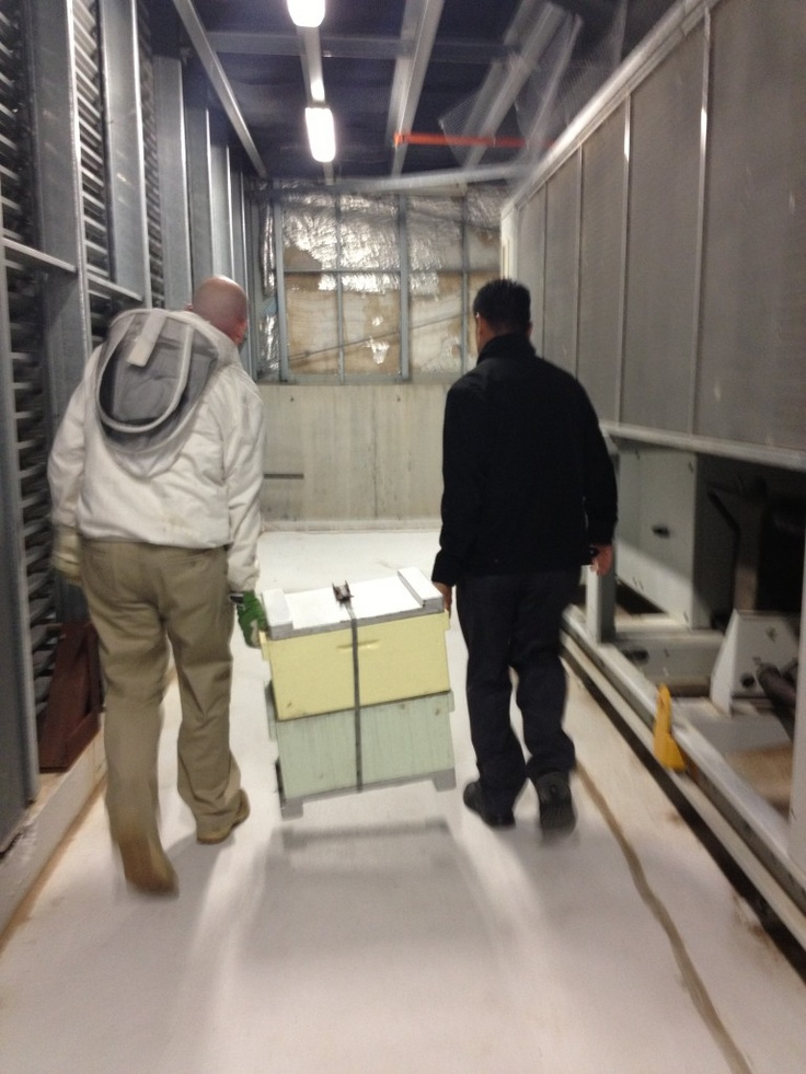:-) Mar and Todd walking a hive through the plant room, outside to their new home on the roof of the Hotel Realm  #rooftop #beekeeeping #urban #agriculture