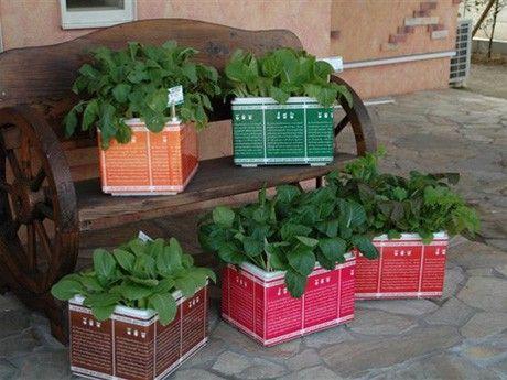「はこ畑」、静かなブームに-箱庭サイズの野菜畑、姫路の企業が開発