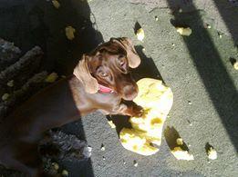 Eating sponge #MyDogLoves #Bestinthecountry