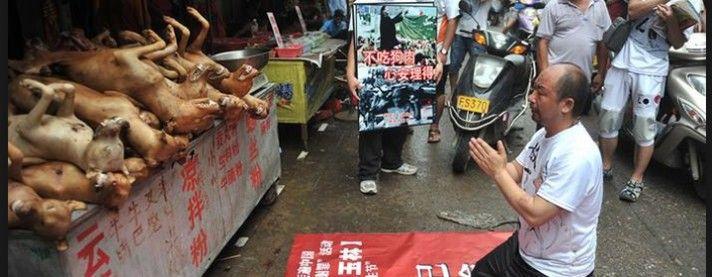 Dogs, dogs, dogs in China ......Festival de viande de chien à Yulin | Fondation Brigitte Bardot