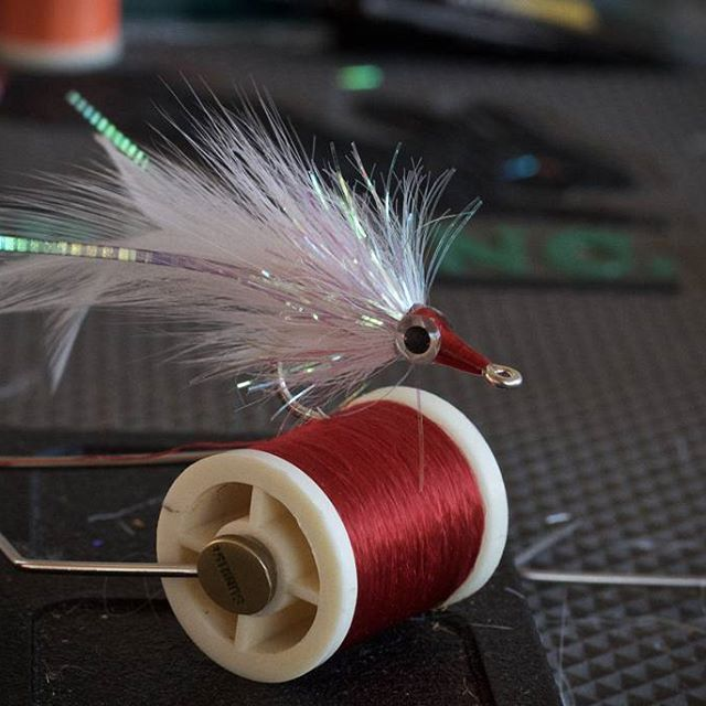 36 best tarpon flies images on pinterest fly tying for What saltwater fish are in season now