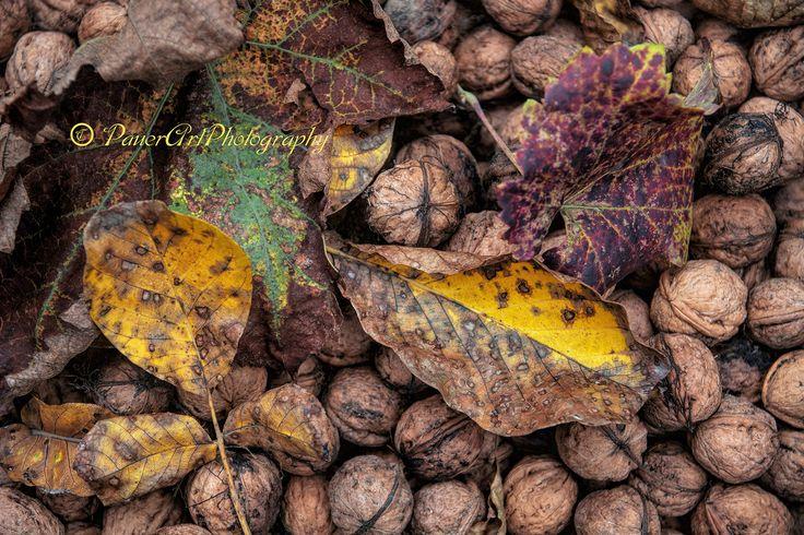 https://flic.kr/p/MoKiMt | Autumn www.emlekkepfotografia.hu