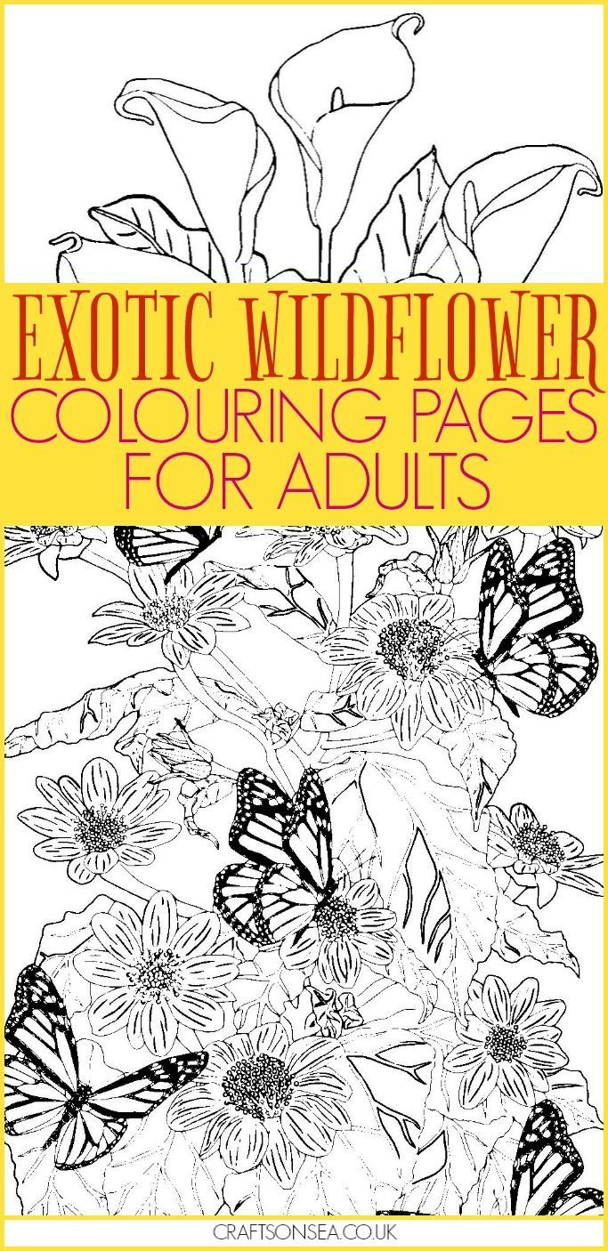 617 best Colouring Pages images on Pinterest | Coloring sheets ...