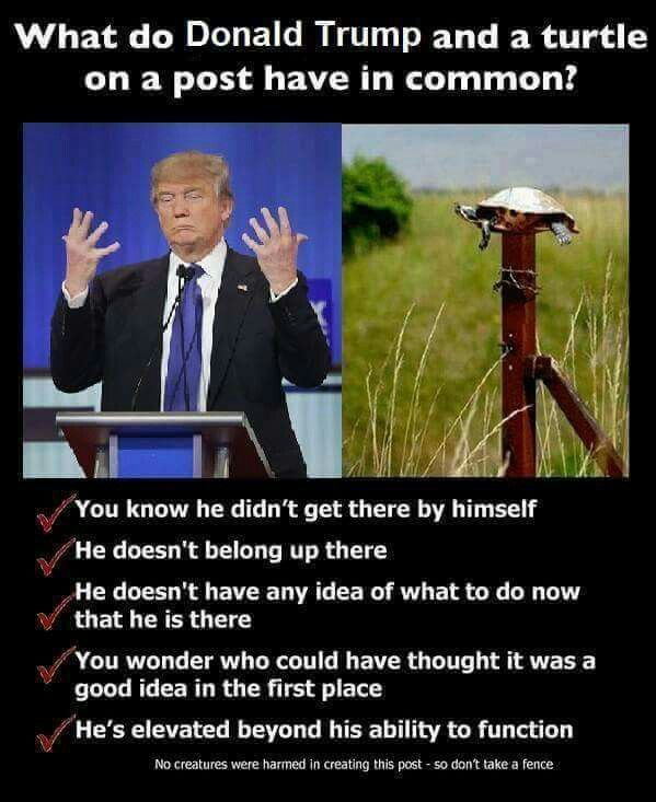 What does Donald Trump and a turtle on a post have in common?