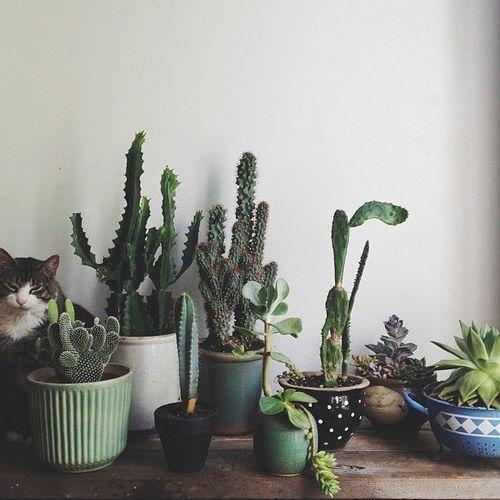 cat. cactus. cacti