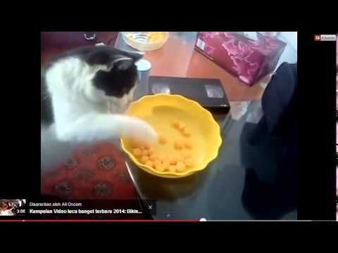 Video Lucu Kucing http://www.youtube.com/watch?v=jzT3SWzTum0&feature=youtu.be