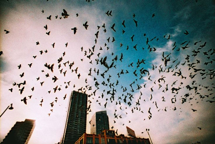 Trending Photos of February 2015 · Lomography