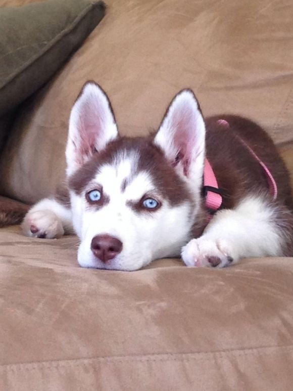 Husky eyes are always so captivating.