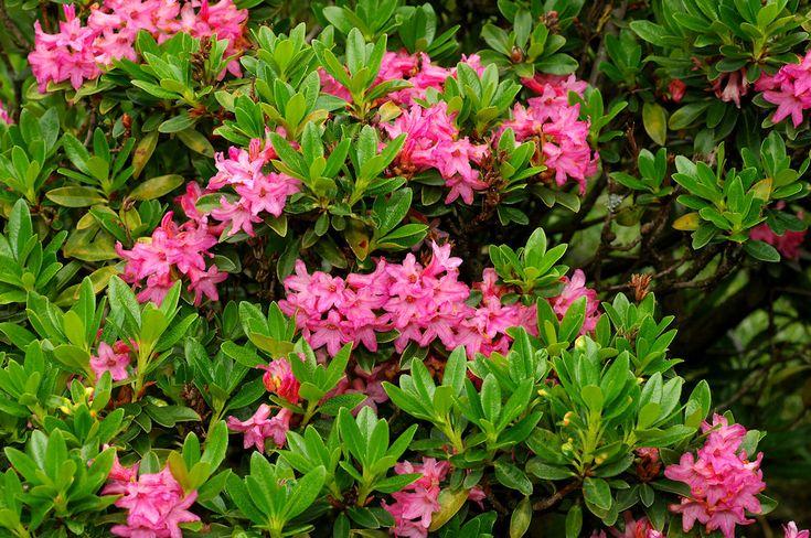Blumen pflanzen Modern Decor Pinterest Modern - gartenpflanzen winterhart immergrun