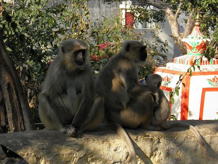 Monkeys everywhere!!