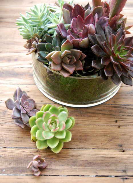Top 45 Ideas About &sukkulenten On Pinterest | Agaves, Concrete ... Sukkulenten Arten Namen Arrangement