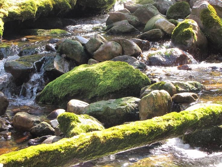 Trail of Seven Bridges, Crowsnest Pass