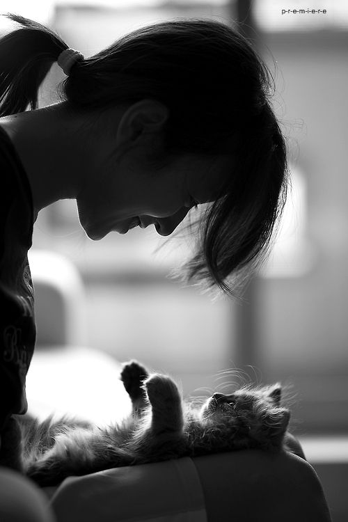gato - gatinho - cat