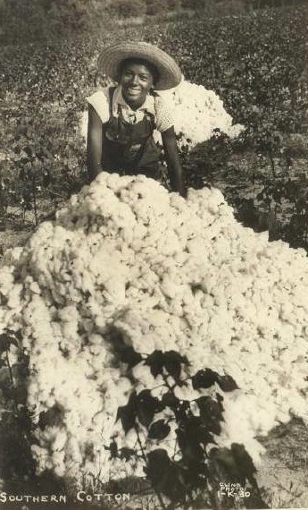 """Southern Cotton"" This is an old photograph postcard depicting a young African American lady posing by a large pile of cotton. There is nothing to identify this young lady or to identify exactly when or where the photograph was taken."