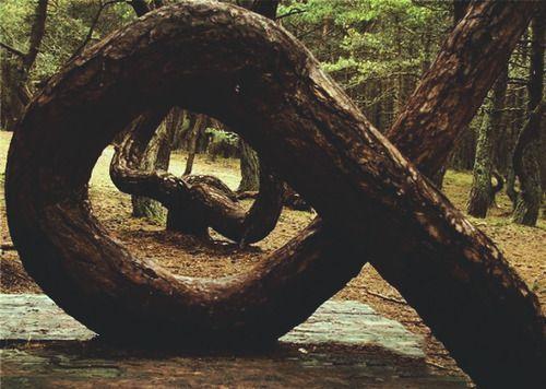 Dancing Forest of Kaliningrad