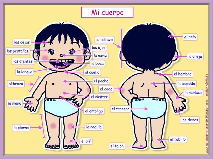 Me encanta escribir en español: Mi cuerpo. (Actividad interactiva)
