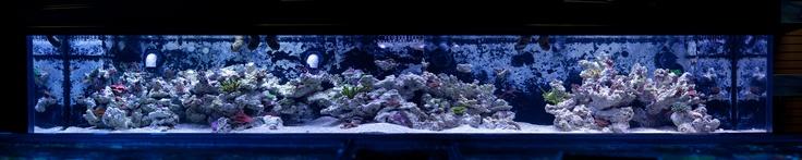 Metal Halide VS LED Aquarium Lighting | Vivid Aquariums Tropical Fish Store in Los Angeles