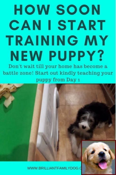 1 Have Dog Behavior Problems Learn About House Training A Shih