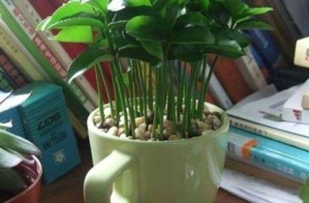 Puedes cultivarla en espacios tan pequeños como una taza de café y le dará poesía a tu lugar.