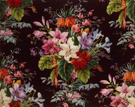 les 242 meilleures images propos de fleurs sur pinterest jardins champs de pavot et. Black Bedroom Furniture Sets. Home Design Ideas