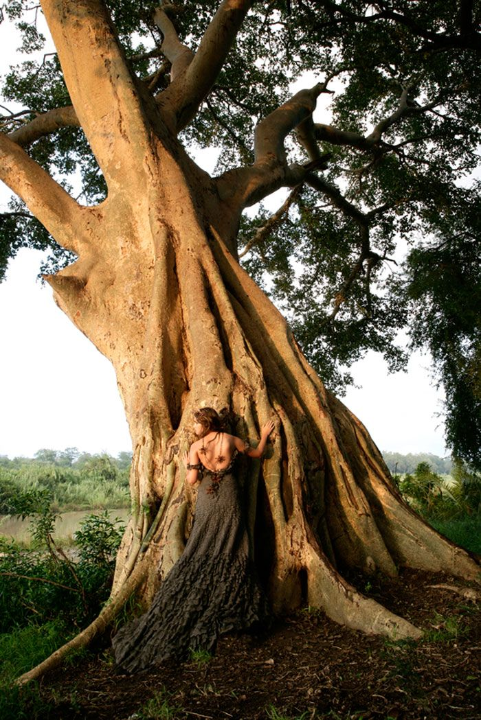 The shot of a sycamore tree used by Londolozi for the 2008 brochure