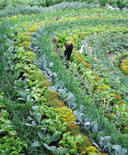 Picking vegetables at the Eden Project by franieK, via Flickr
