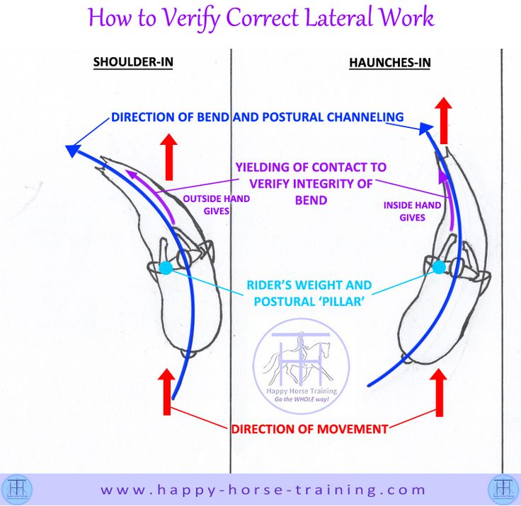 This diagram shows you how to check your horse is correctly balanced in lateral work, and, therefore, that this work is of gymnastic value
