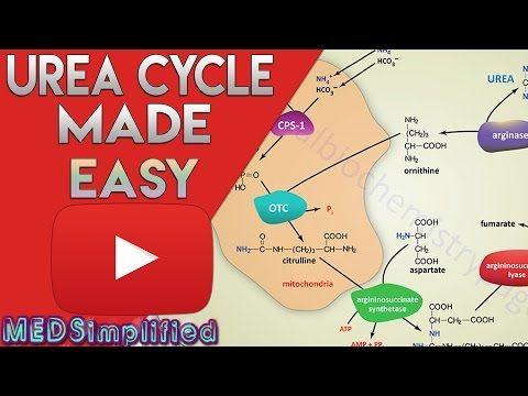 Urea Cycle Made Simple - Biochemistry Video - YouTube