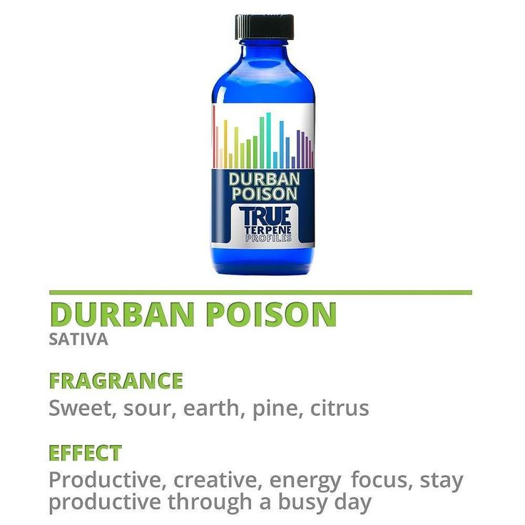 Durban Poison is a pure sativa known for its energy-giving uplifting creative effects. It has a sweet smell and a sweet earthy pine flavor. #terps #terpenes #trueterpenes #aromatherapy #aromatic #essentialoils