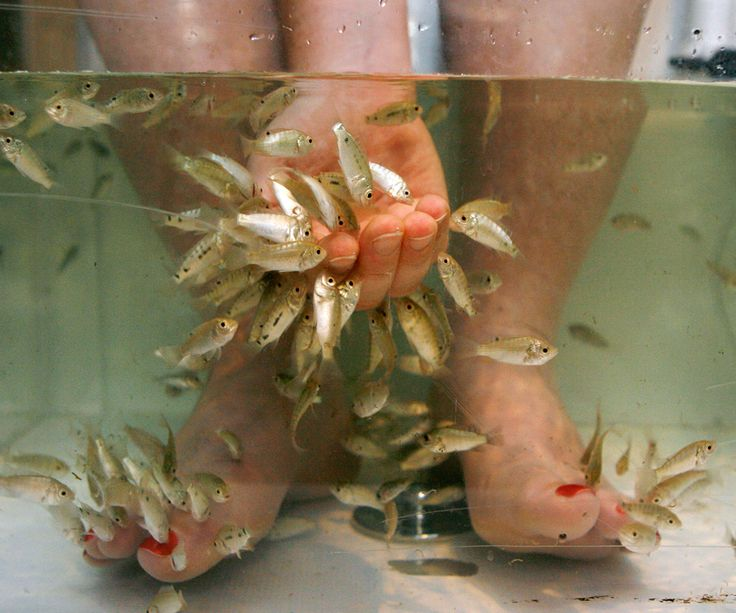 9 best ayurvedic treatment in chennai images on pinterest for Fish eating dead skin spa