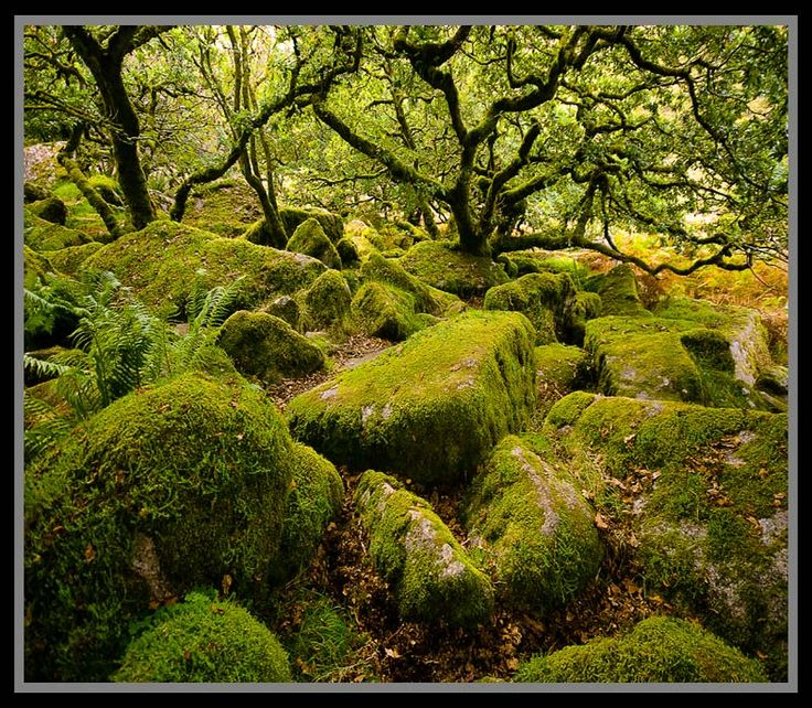 Favourite enchanted place. Wistmans Wood - Dartmoor, Devon, England