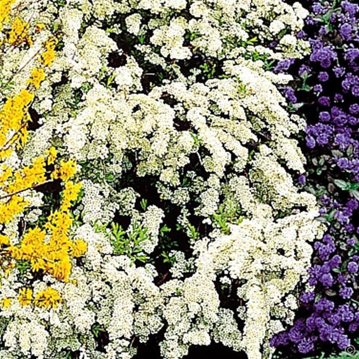 les 25 meilleures id es de la cat gorie spir e sur pinterest quoi planter en fleurs en avril. Black Bedroom Furniture Sets. Home Design Ideas