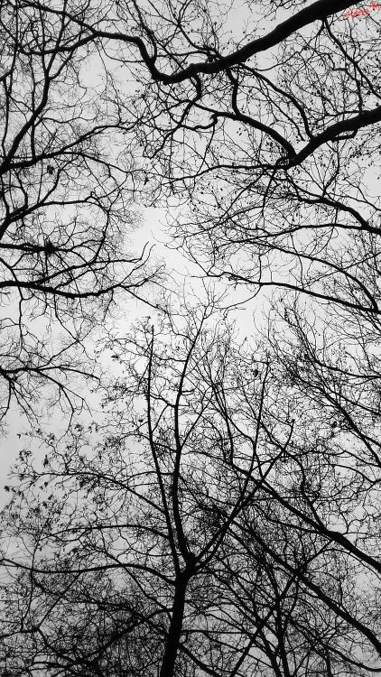 by ♡Gosia M more: http://xgosia-mx.tumblr.com   &   https://www.facebook.com/gosiamphoto  #sky #b&w #gosiam #tree