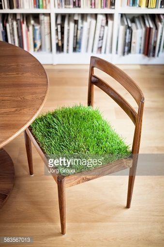 Stock Photo : Grass growing on a chair