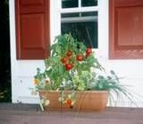 container gardening, since a raised garden looks like it might not happen this year!