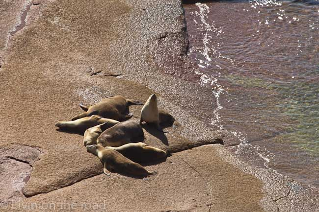 Sceale Bay in South Australia - the state's only mainland sea lion breeding colony.