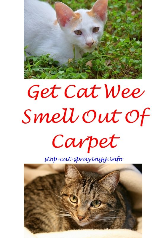Cat My Sprayed On Me At What Age Do Male Cats Start Spraying Catspray Who S Anti Furniture Pre Lacquer Sp