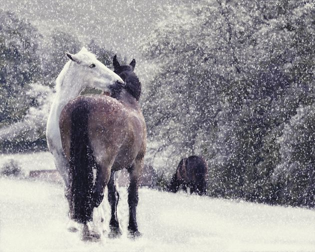 Looking for charity cards to help equestrian causes this Christmas? Horse & Hound brings you a selection of 23 well-deserving cause with beautiful cards to enjoy at http://www.horseandhound.co.uk/features/equestrian-horse-charity-christmas-cards/#eG0MVePU3HyQQktL.99