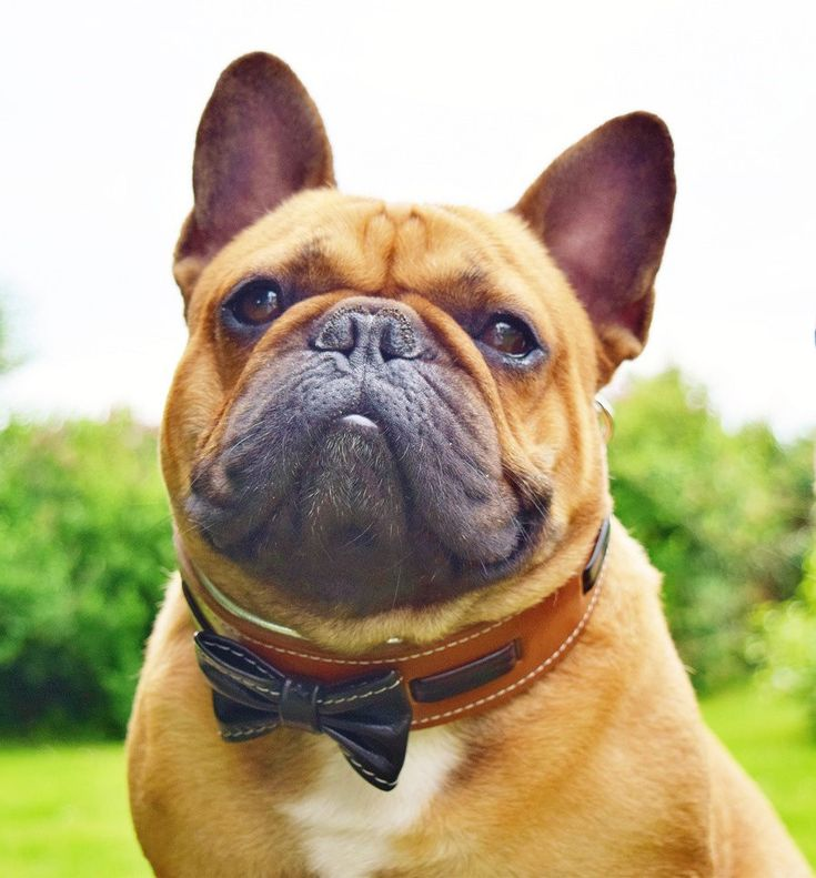 8 best dog collars for medium sized dogs images on